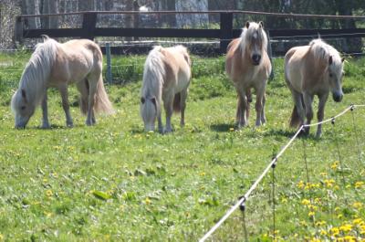 Enge-Sande, bei Flensburg - Pferde- und Tierfreunde aufgepasst!